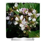 Flowers Of Berries Shower Curtain