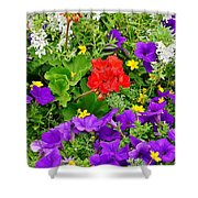 Flowers Of Bethany Beach - Petunias Shower Curtain