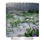 Flowers Of Ocotilla Shower Curtain