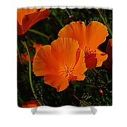 Flowers Of The Andes Shower Curtain