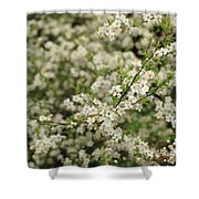 Flowers On A Plum Tree Shower Curtain