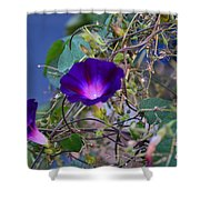Flowers On Dupont Street Shower Curtain