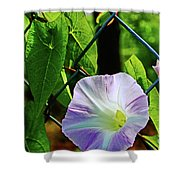 Flowers On The Fence 1 Shower Curtain