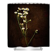 Flowers On Wood Shower Curtain