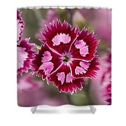 Flowers Pink Purple Decorative 4671 300x480 Shower Curtain