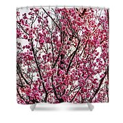 Flowers Of Spring Shower Curtain