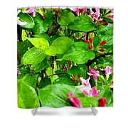 Flowery Flope Shower Curtain