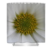 Core Of A Daisy Shower Curtain