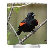 Fluffed Red-winged Blackbird Shower Curtain