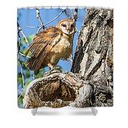 Fluffed Up Barn Owl Owlet Shower Curtain