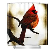 Fluffed Up Shower Curtain
