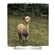 Fluffy Alpaca Shower Curtain
