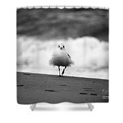 Fluffy Bird Shower Curtain