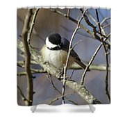 Fluffy Chickadee Shower Curtain