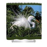 Fluffy Great Egret Shower Curtain