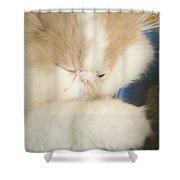 Fluffy Kitten Shower Curtain