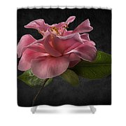 Fluffy Pink Camellia 2 Shower Curtain