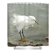 Fluffy Snowy Egret Shower Curtain