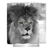 Fluffy Tango  Black And White  T O C Shower Curtain