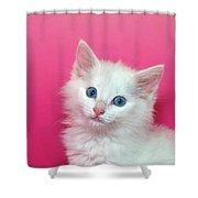 Fluffy White Kitten On Pink Shower Curtain