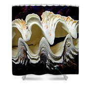 Fluted Giant Clam Shell Shower Curtain