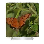 Fluttering By Shower Curtain