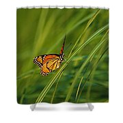 Fluttering Through The Summer Grass Shower Curtain