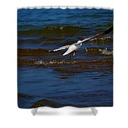Fly Away Shower Curtain by Amanda Struz