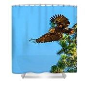 Fly Like An Eagle Shower Curtain