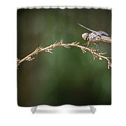 Fly Little Dragonfly Shower Curtain