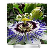 Fly On A Passion Flower Shower Curtain