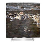 Flycatcher Hunting On The Buffalo River Shower Curtain