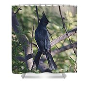 Silky Flycatcher Shower Curtain