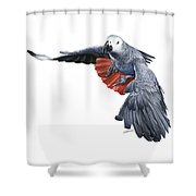 Flying African Grey Parrot Shower Curtain