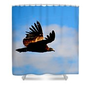 Flying Condor Shower Curtain