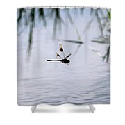 Flying Dragonfly Over Pond With Reeds Shower Curtain