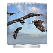 Flying Eagles Shower Curtain