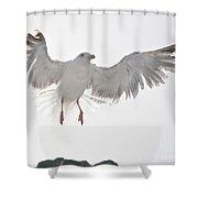 Flying European Herring Gull Shower Curtain