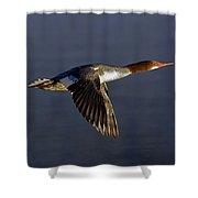 Flying Female Merganser - Odell Lake Oregon Shower Curtain