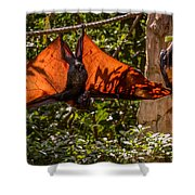 Flying Foxes Shower Curtain