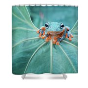 Flying Frog Wallace Shower Curtain
