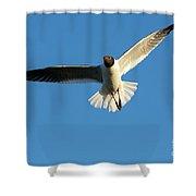 Flying Gull Shower Curtain