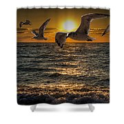 Flying Gulls At Sunset Shower Curtain