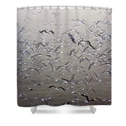 Flying Gulls Shower Curtain