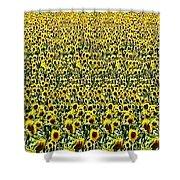 Flying Over Sunflower Fields Shower Curtain
