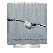Flying Pelican Shower Curtain