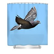Flying Pigeon . 7d8640 Shower Curtain