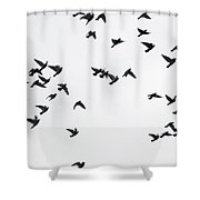 Flying Pigeons Shower Curtain