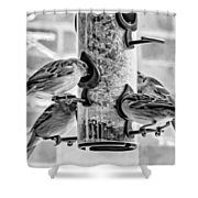 Flying Piglets Bw Shower Curtain