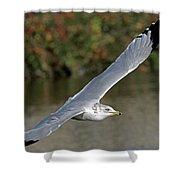 Flying Sea Gull - Eugene Oregon Shower Curtain